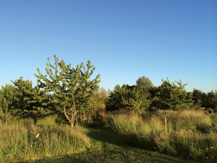 Jardin D ecotones - 008
